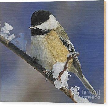 Winter Chickadee... Wood Print by Nina Stavlund