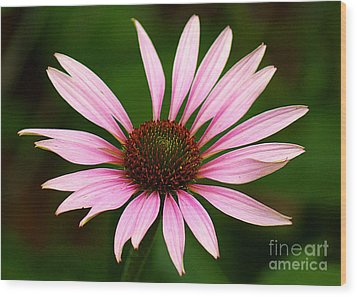 Wood Print featuring the photograph Coneflower - Echinacea by Lisa L Silva
