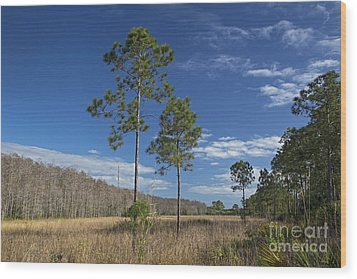 Corkscrew Swamp Wood Print by Jim West