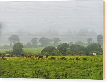 Cows At Rest Wood Print