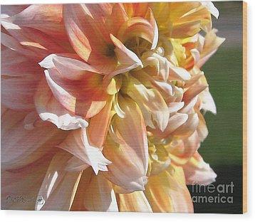 Dahlia Named Peaches-n-cream Wood Print by J McCombie