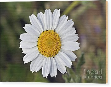 Wood Print featuring the photograph Daisy Flower by George Atsametakis