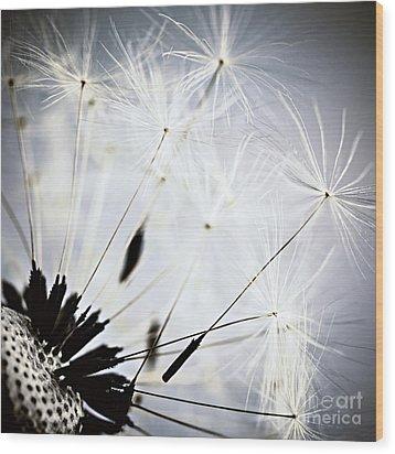 Dandelion Wood Print by Elena Elisseeva
