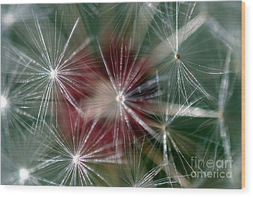 Wood Print featuring the photograph Dandelion Seed Head by Henrik Lehnerer