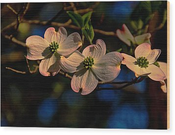 Wood Print featuring the photograph 3 Dogwoods On A Branch by John Harding