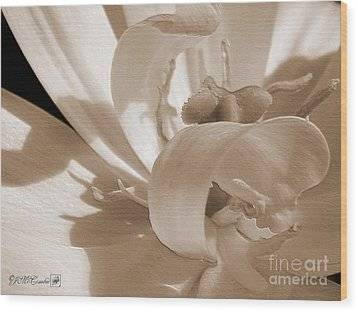 Double Late Tulip Named Angelique Wood Print by J McCombie