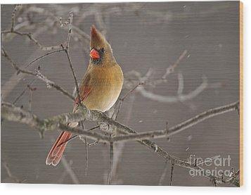 Female Northern Cardinal Wood Print