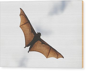 Flying Bat Wood Print by Craig Dingle