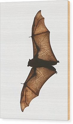 Flying Fox Wood Print