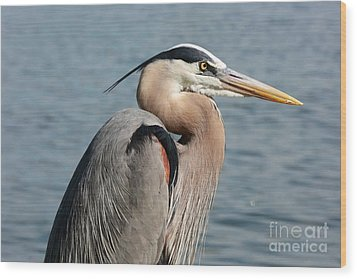 Great Blue Heron Profile Wood Print by Carol Groenen