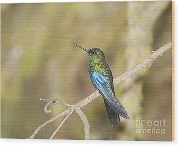 Wood Print featuring the photograph Great Sapphirewing Hummingbird by Dan Suzio