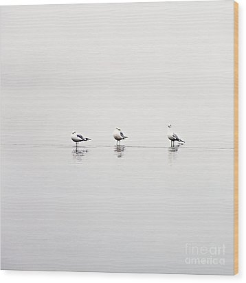 3 Gulls Wood Print by Sylvia Cook