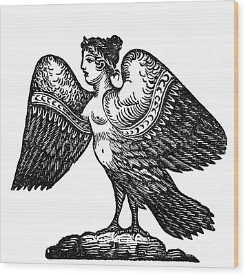 Harpy, Legendary Creature Wood Print by Photo Researchers