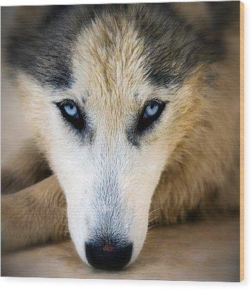 Husky  Wood Print by Stelios Kleanthous