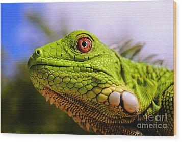 Iguana Wood Print