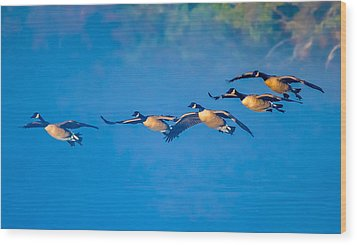 Incoming Geese Wood Print by Brian Stevens