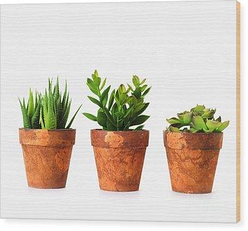 3 Indoor Plants Wood Print by Boon Mee