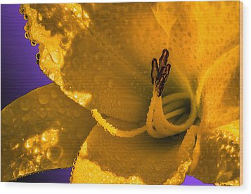 Mellow Yellow Wood Print by Brian Stevens