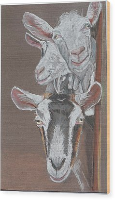 3 Nosey Goats Wood Print