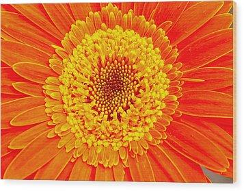 Orange Gerber Wood Print by Borislav Marinic