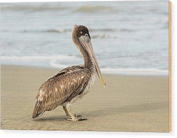 Pelican Wood Print by Marek Poplawski