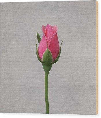 Pink Rosebud Wood Print by Sandy Keeton