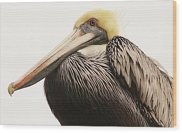 Pretty Pelican Wood Print by Paulette Thomas
