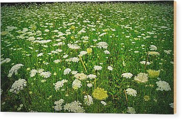 Queen Annes Lace Wood Print by Carol Toepke