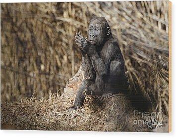 Quiet Juvenile Gorilla Wood Print