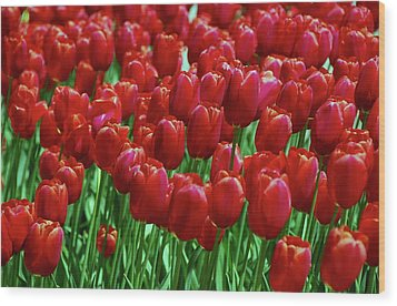 Wood Print featuring the photograph Red Tulips  by Allen Beatty
