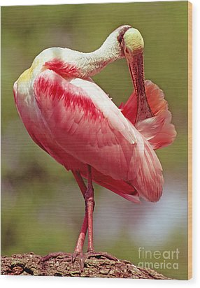 Roseate Spoonbill Wood Print by Millard H. Sharp