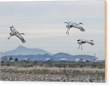 Sandhill Cranes Wood Print by Tam Ryan