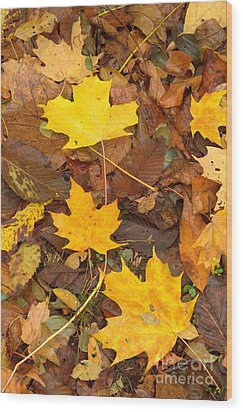 Wood Print featuring the photograph 3 Shades Of Yellow by Jim McCain
