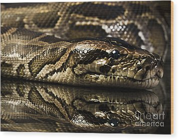 Wood Print featuring the photograph Snake by Gunnar Orn Arnason