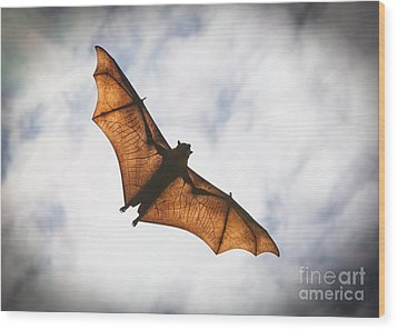 Spooky Bat Wood Print by Craig Dingle