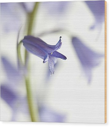 Spring Bluebells Wood Print by Carol Leigh