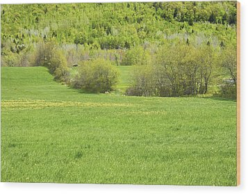 Spring Farm Landscape In Maine Wood Print by Keith Webber Jr