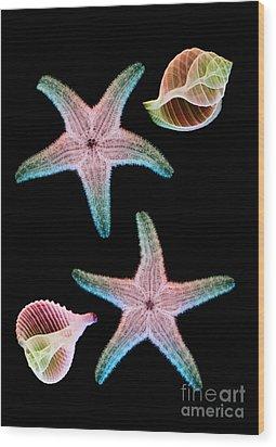 Starfish And Marine Molluscs Wood Print by D Roberts