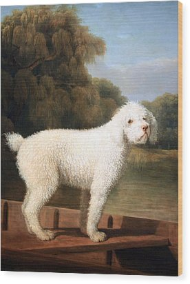 Stubbs' White Poodle In A Punt Wood Print