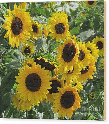 Sunflower Field Wood Print by France Laliberte
