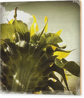 Sunflower Wood Print by Les Cunliffe