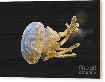 The Spotted Jelly Or Lagoon Jelly Mastigias Papua Wood Print by Jamie Pham