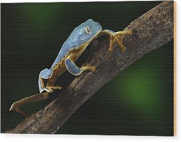 Tree Frog Climbing Wood Print