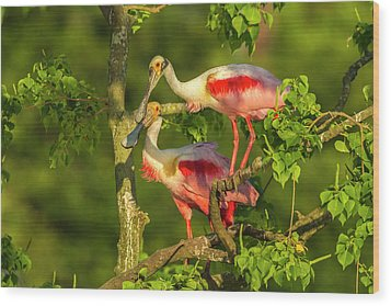 Usa, Louisiana, Jefferson Island Wood Print