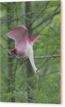 Usa, Louisiana, Lake Martin Wood Print