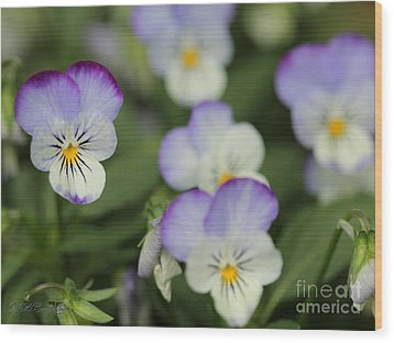 Viola Named Sorbet Lemon Blueberry Swirl Wood Print by J McCombie