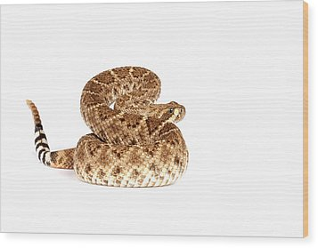 Western Diamondback Rattlesnake Wood Print by John Bell