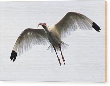 White Ibis Wood Print by Mark Newman