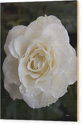 White Rose Wood Print by Ivete Basso Photography