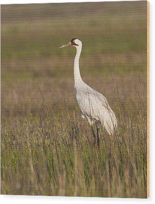 Whooping Crane Wood Print by Doug Lloyd